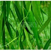Buy cheap White willow bark extract healthy nutrient additive from wholesalers