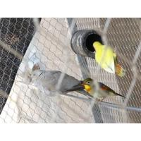 Wholesale Silvery Outdoor Aviary Netting Stainless Steel Strong Toughness For Bird Fencing from china suppliers