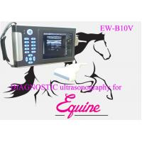 Wholesale Low cost veterinary ultrasound scanner EW-B10V with Linear probe L7.5/40 for small and large animal from china suppliers