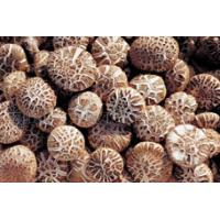 Buy cheap Dry Mushrooms from wholesalers