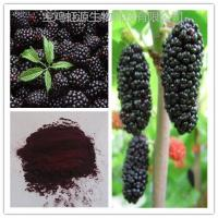 Buy cheap High quality organic dried Mulberry Fruit Extract powder from wholesalers