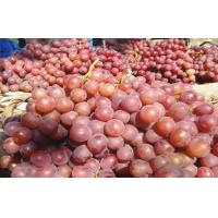Buy cheap Fresh Sweet White / Green Seedless Grapes With Catechins , Micronutrient Minerals from wholesalers