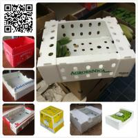 Buy cheap 5kgs 10lbs pp corflute coroplast vegetable fruit packaging box product