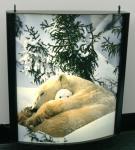 Buy cheap Waterproof Light Box Poster Printing , Backlit Film Printing from wholesalers