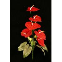 Buy cheap Anthurium Bush from wholesalers
