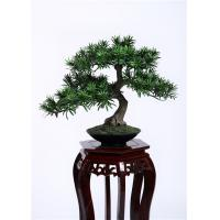 Wholesale Delightful Artificial Plants Bonsai , Unique Bonsai Trees Cedrela Odorata Exotic Display from china suppliers