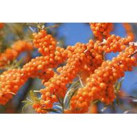 Buy cheap Sea Buckthorn Oil from wholesalers