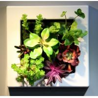 Wholesale Plastic Frame Artificial Living Plants Wall Hanging Ornament Craft for Commercial Office from china suppliers