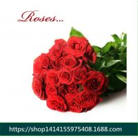 Wholesale Fresh cut roses natural flowers wholesale prices export fresh cut red roses from china suppliers
