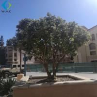 Wholesale Green Plastic Olive Tree Large Size For Garden Customized Design from china suppliers