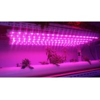 Buy cheap Led Grow Tube T810W/15W/20W 600mm 900mm 1200mm led grow lights for hydroponics from wholesalers