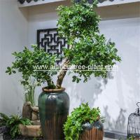 Wholesale Green Money Plant Artificial Fortune Tree Water Jar Home Decoration ISO from china suppliers