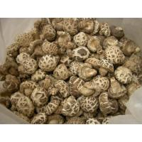 Buy cheap Green Dried Mushroom/shiitake from wholesalers