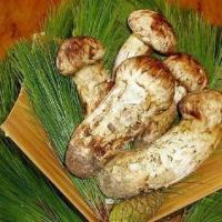 Buy cheap Matsutake Mushroom, Totally Natural Product, Suitable for Medical Use from wholesalers