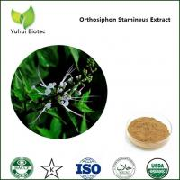Wholesale Orthosiphon Stamineus Extract, Orthosiphon stamineus benth extract,Kidney Tea Extract from china suppliers