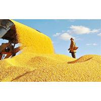 Buy cheap new crop feed grains cereals DDGS feed corn global trade from wholesalers
