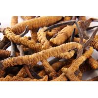 Buy cheap China Manufacturer Supply Cordyceps sinensis powder from wholesalers
