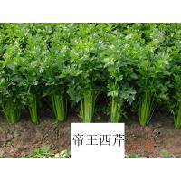 Buy cheap Supply Celery Seed Extract 10:1  Apium Graveolens Extract from wholesalers