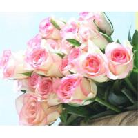 Wholesale Fresh cut roses natural flowers wholesale prices export fresh cut hongxiu roses from china suppliers