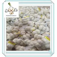 Health food fresh garlic in Chinese wholesale 5.0 by 10kg carton Manufactures