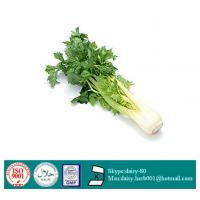 Buy cheap GMP 100% Natural Celery Seed Extract Apigenin from wholesalers