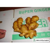 Buy cheap Healthy Fresh Raw Ginger No Pesticide Residues Used For Juicing / Flavor from wholesalers