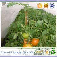 Wholesale Agriculture used pp spunbonded nonwoven fabric plant protect cover from china suppliers