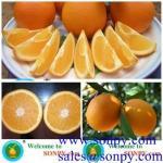 Buy cheap navel orange,fresh orange,mandarin orange from wholesalers