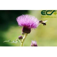 Buy cheap Detoxification Pure Milk Thistle Extract Powder Herbal Nutritional Supplements product