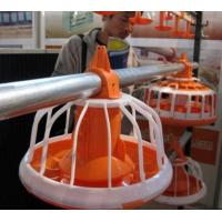 Buy cheap Automatic Poultry Equipment For Broilers And Chickens from wholesalers