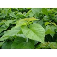 Top garde 100% Organic Plant Extract 1-DNJ 1%HPLC 10:1 Loss weight Mulberry Leaf Extract Manufactures