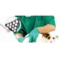 Wholesale LED minor surgical lamp Q10 mobile type for veterinary examination from china suppliers