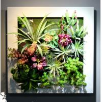 Buy cheap White Square Frame Plastic Plants Wall Decoative Craft Items for Store Museum product