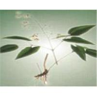 Buy cheap Epimedium Extract-bella@organic-herb.com from wholesalers