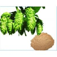 Buy cheap Hops Extract,Humulus Lupulus L. Extract,Light Yellow-Brown Powder,Herbal Extract/Plant Extract from wholesalers