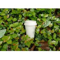 Wholesale Coffee 100% Compostable Paper Cups Customized Logo For Fast Food Restaurants from china suppliers