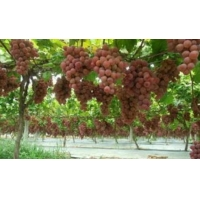 Buy cheap Reflective Metalized PE Film Apples Grapes Biodegradable Shrink Film from wholesalers