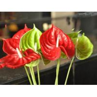 Buy cheap Artificial flower PU anthurium from wholesalers
