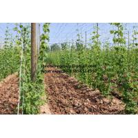 Buy cheap Galvanized Steel Wire for Vineyard from wholesalers