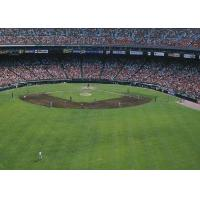Buy cheap Green Baseball Artificial Turf , Synthetic Turf Baseball Fields from wholesalers