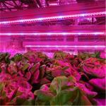 Buy cheap Full Spectrum T8 T5 Plant LED Grow Light Tube from wholesalers