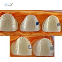 Wholesale Producing Steps Of Marilan Bridge Dental Study Models For Teeth Teaching from china suppliers
