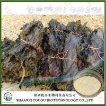 Buy cheap China Brown Seaweed Extract Fucoidan 95%, 85%/konbu fukoidan powder/kelp extract fuicodan Supplier from wholesalers