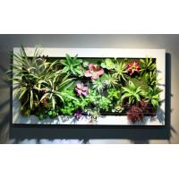 Wholesale Metal Frame Wall Mounted Plastic Succulent Plants Arrangement Hanging Art for Livingroom from china suppliers