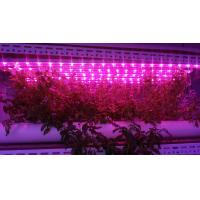 Wholesale Led Grow grow lights 900mm 15w length W-Full spectrum 4000K:660nm 3;1 T8 led growing light for hydroponics culture plant from china suppliers