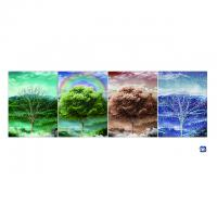 Wholesale 3D Flip Lenticular Poster Printing With 12x17 Inches Four Season Tree from china suppliers