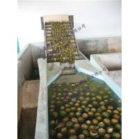 Mango And  Pineapple processing line Manufactures