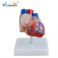 Wholesale New Style Life-Size Heart Model Enlarged Cardiac Planing Model from china suppliers