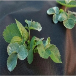 Buy cheap Spun Bond 70GSM 100GSM Biodegradable Landscape Fabric from wholesalers