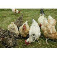 Buy cheap Chicken Mesh Hexagonal Wire Nettng from wholesalers